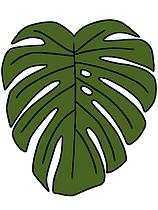 Monstera green.png