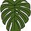 Thumbnail: Monstera Leaf Sticker