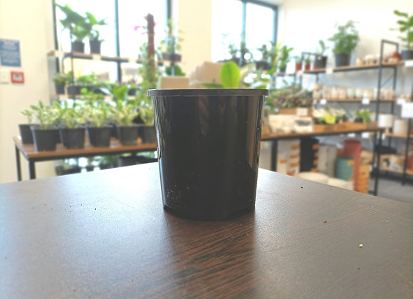 10cm Nursery Pot