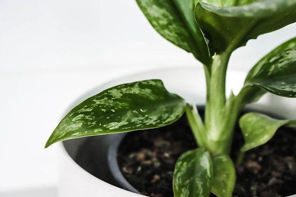 The Plant Supreme Box