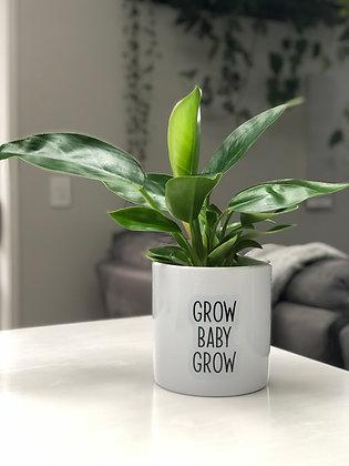 Grow Baby Grow Pot Quote