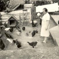 Maria e sua criação de galinhas