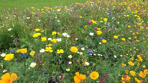 Plzenska kvetnice