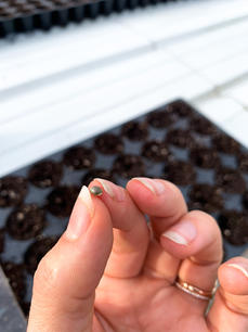 Our CBD's journey starts with the best seeds