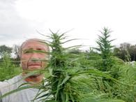 Joe Gibson holding up a beautiful hemp plant