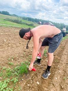 Steve fertilizes our hemp plants