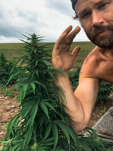 Hemp plants the size of your arm!