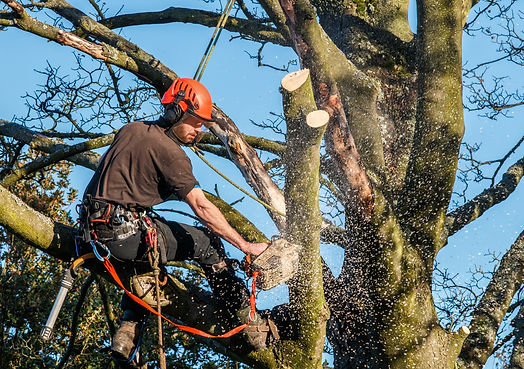 Tree lopping service Perthshire