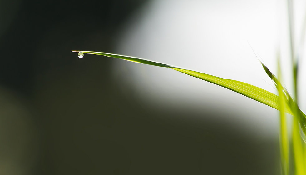 grass-blade-of-grass-451260_1920.jpg