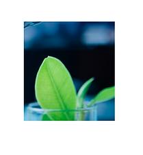 Bioinitaly 2021 call per startup.png