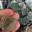 Thumbnail: Fluorite Octohedron