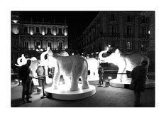 serie Notturna Piazza Università CATANIA, Italy, 2019