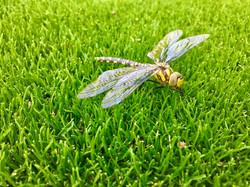 Rasen.jpeg