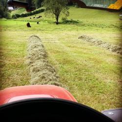 Ernte #heu #galloway #bio #rind #ernte #lindner #family #worktogether #farmer #organic #salzburgland