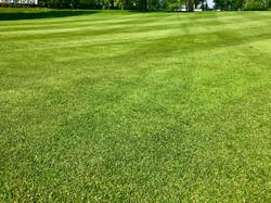 Perfekter Rasen.jpeg