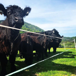 #sonnegenießen #galloways #biofarmteufl #bio #fuschlseeregion #salzburg #faistenau #farmer #organic