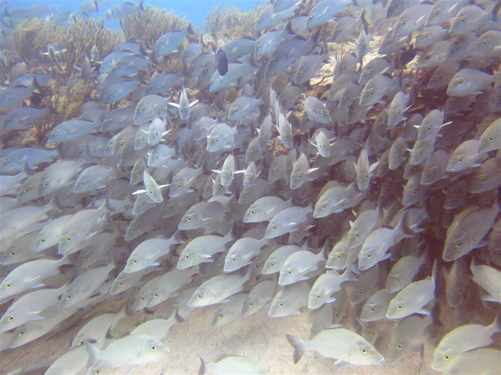 2 fish shoal (Medium)
