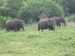 elepahnt safari