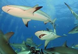 Animal  sharks  Darren Bryant