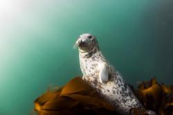 Animal seal