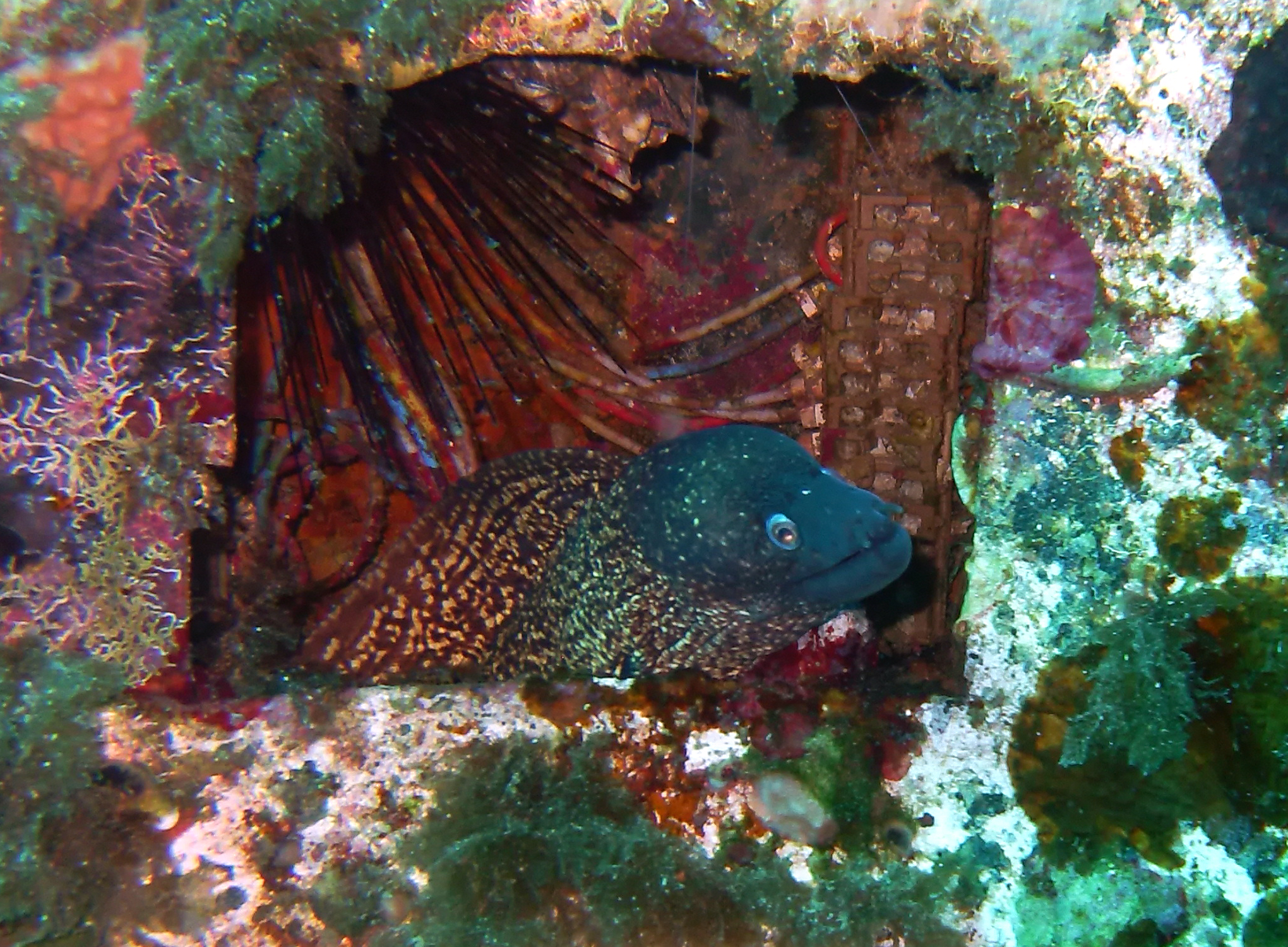 Animal. moray eel in Malta. Amy Dunton