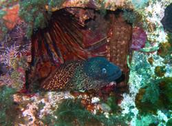 Animal. moray eel in Malta. Amy Dunton