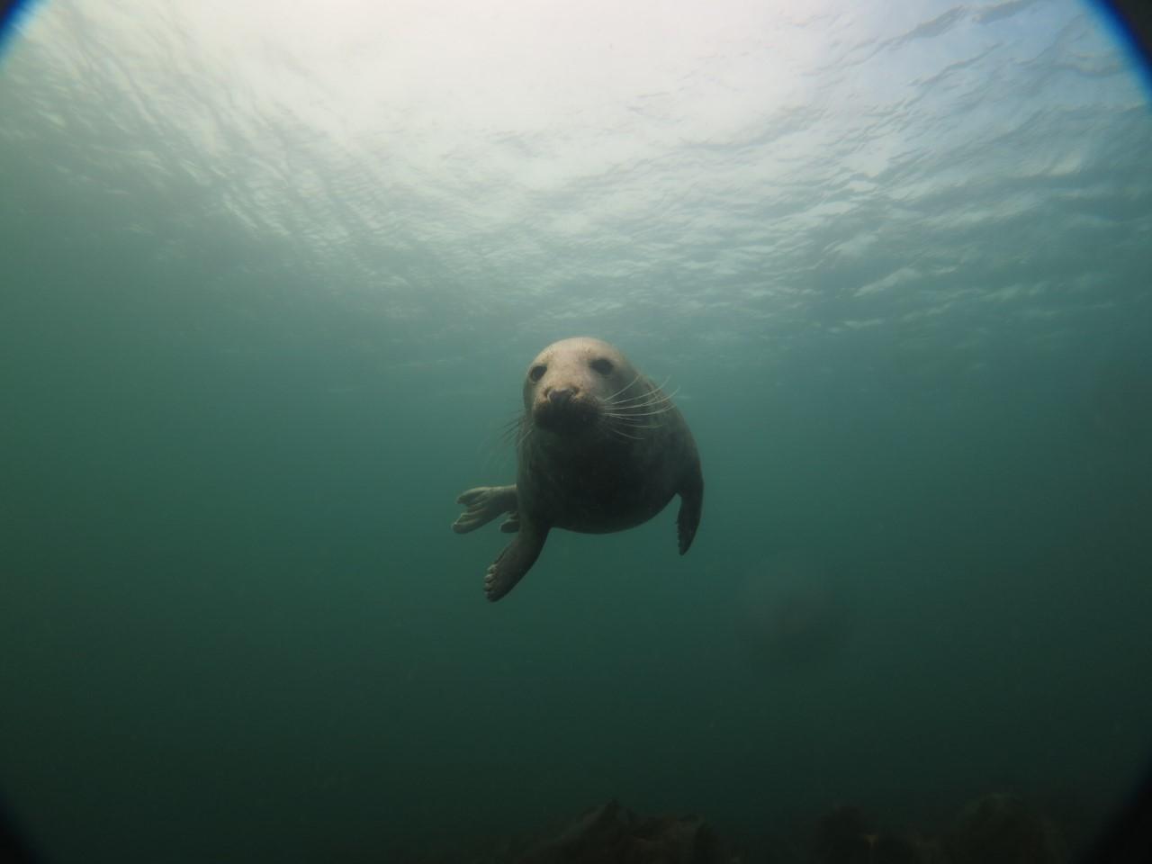 4. seal