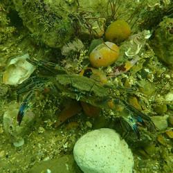 crab (Medium)