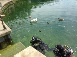 1. ducks