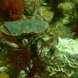 crab2 (Medium)