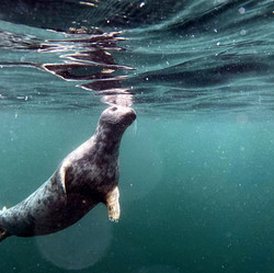 Seal b