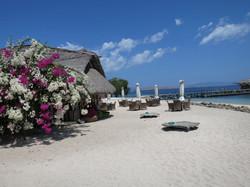 koodo beach bar