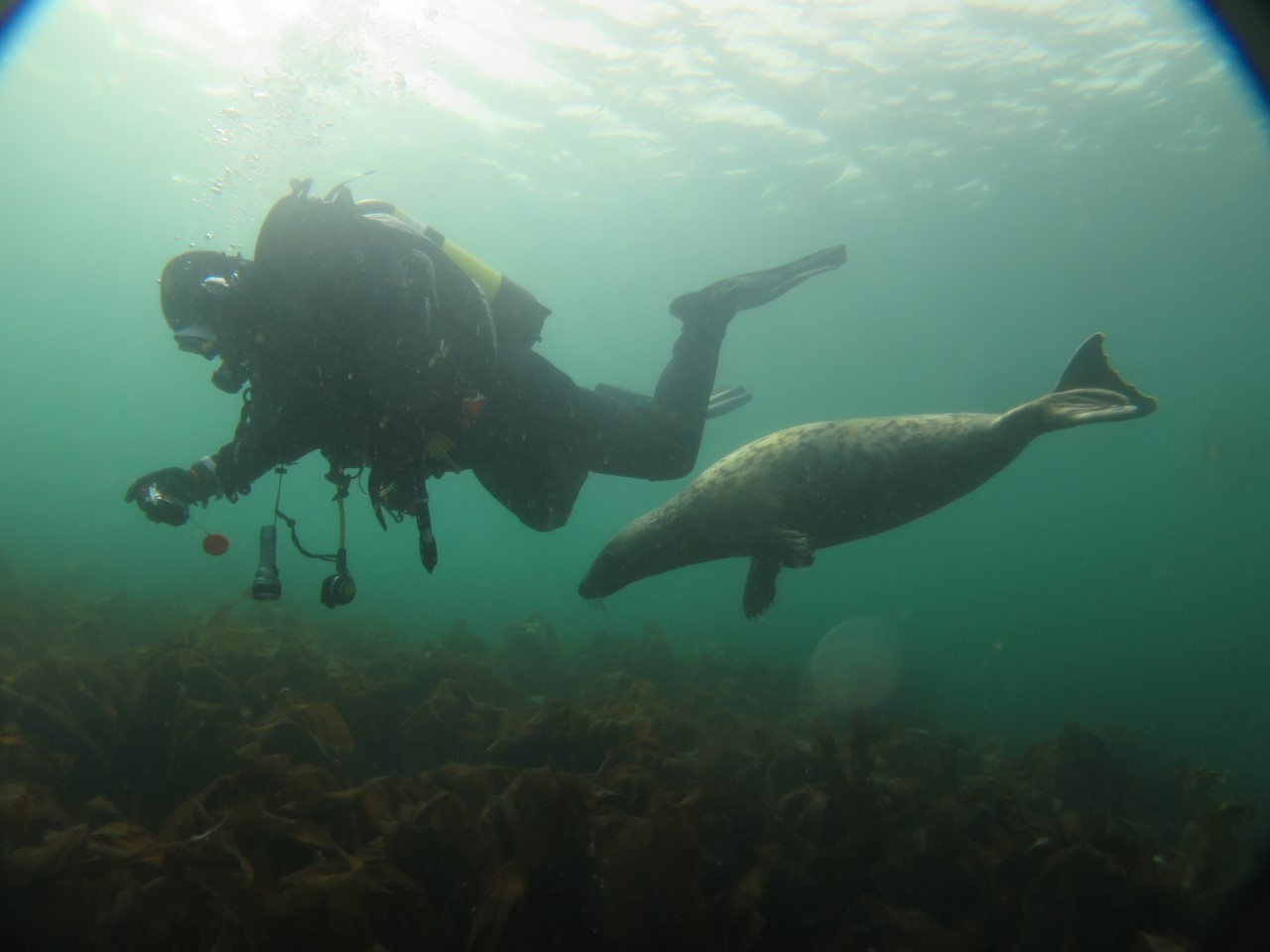 5. diver nd seal
