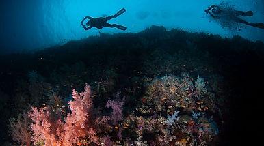 Saudi reef.jpg