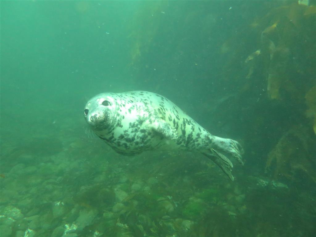 seal 2(Medium)