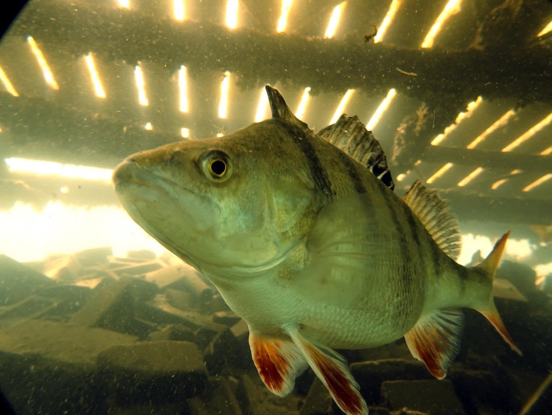 2.  fish