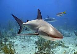 Animal  Shark Darren bryant