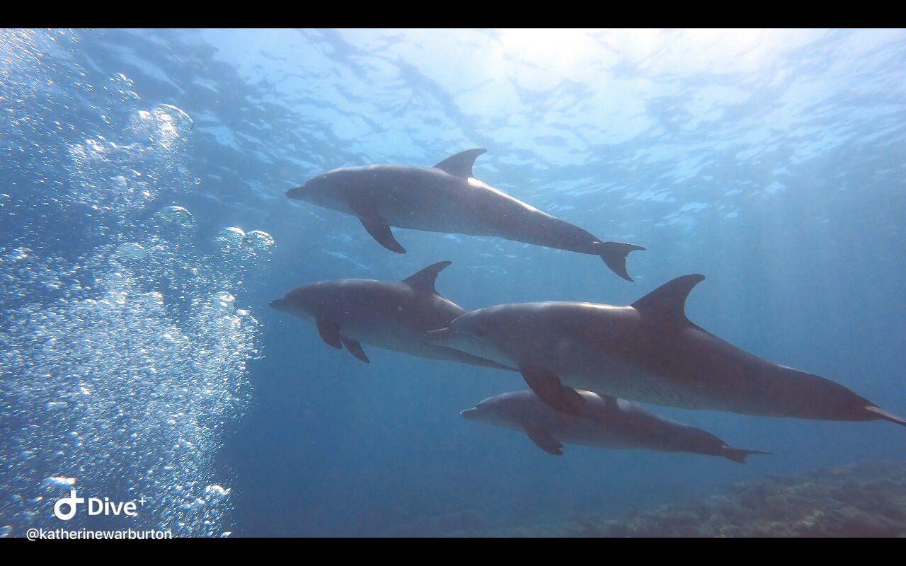 dophins