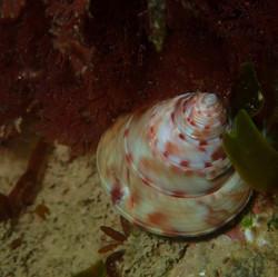 shell (Medium)