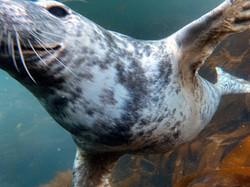 Seal a