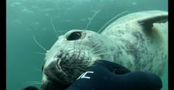 Seal c