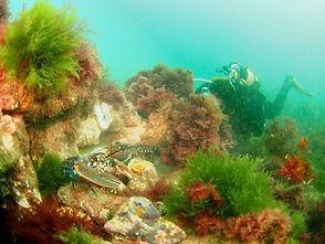 Norfolk Coast dive (Medium).JPG