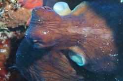 Fav animal Octopus Mel Chilvers
