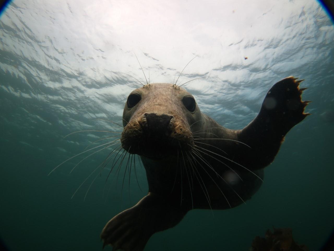 1. Seal