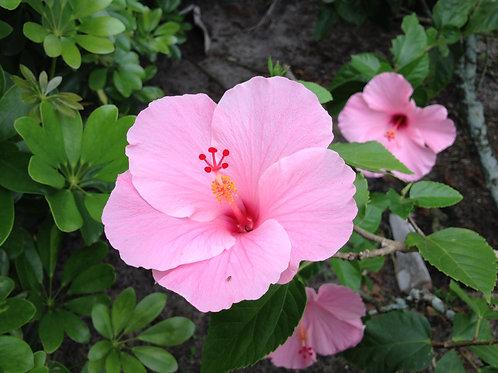 Hawaiian Shamanistic Healing Online Course