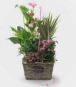 Conjunto de plantas naturales para regalar. desde nuestra wen de la floristeria la alqueria valencia.