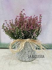 Planta natural brezo, vinka. Realizamos envio a domicilio en valencia.