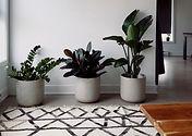 Plantas naturales para regalar. desde orquideas, plantas de navidad, podra seleccionar desde nuestra web lo que precise.
