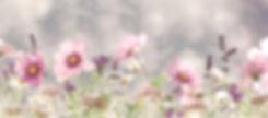 wild-flowers-571940_1920_edited.jpg