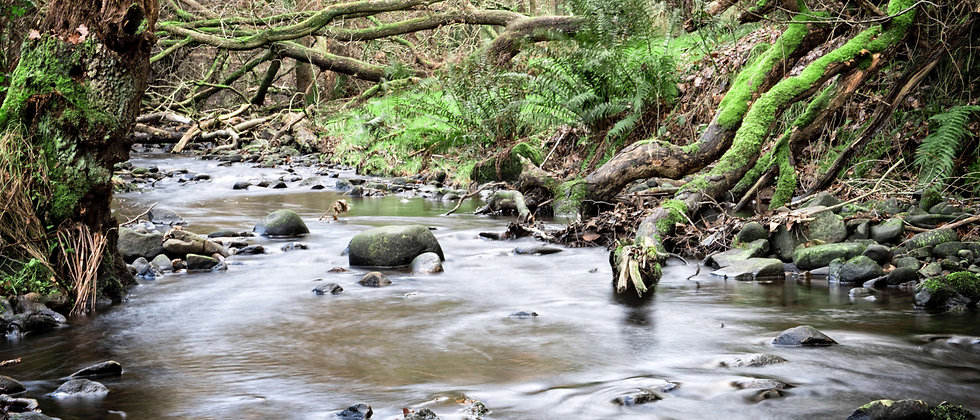 stream river water elephant scene green trees taken by me photography